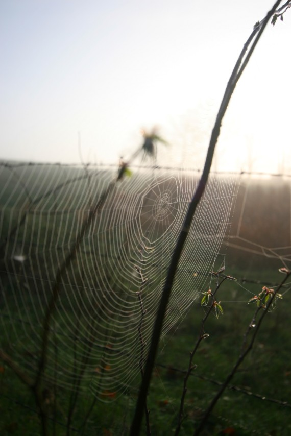 A Full Night's Work, spider web