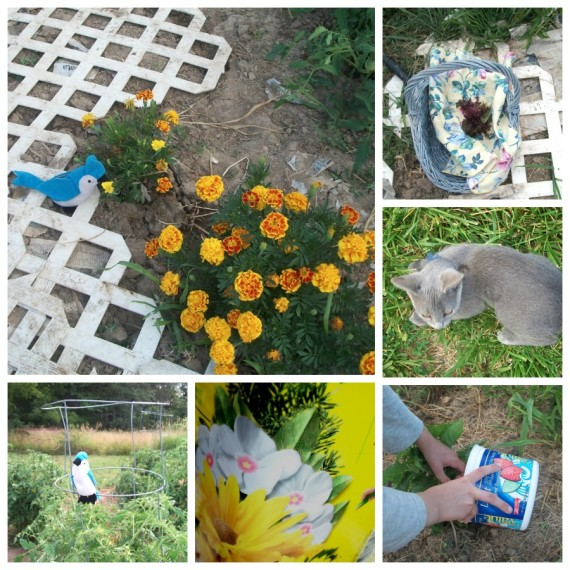 Garden Update - Kids' View