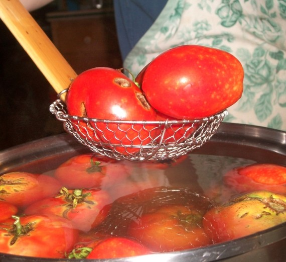 Making Salsa 2 : Apron Strings & other things