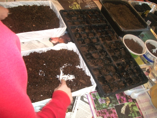 Bedding Plants 1 - Apron Strings & other things