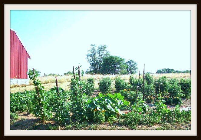 Garden Plot - Apron Strings & other things