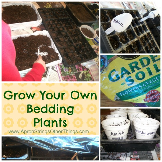Grow Your Own Bedding Plants  Apron Strings & other things