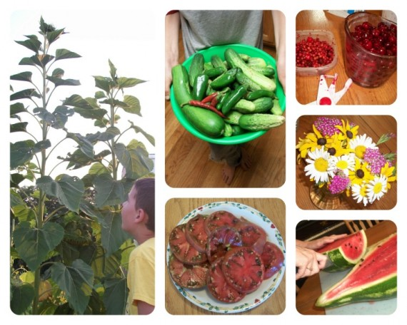 Bountiful Harvest - Apron Strings & other things