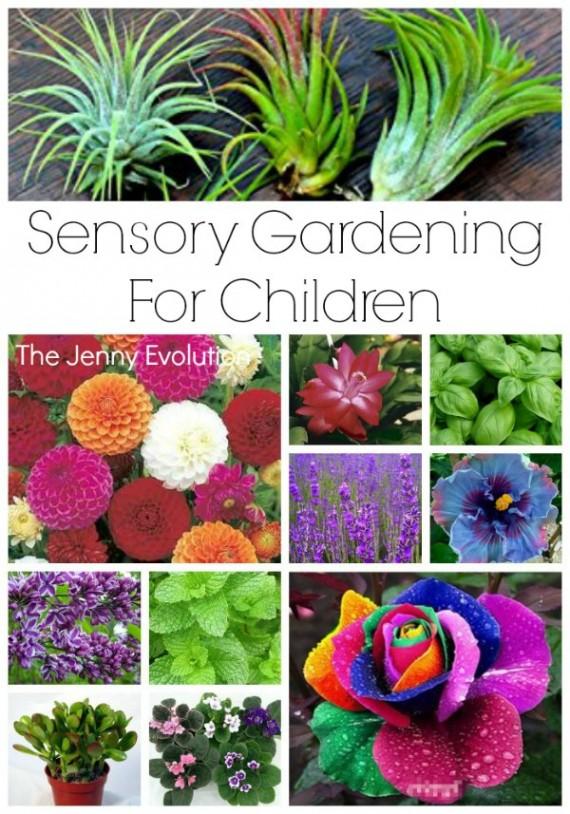 hfh 7.23.15 Sensory-Gardening-for-Children