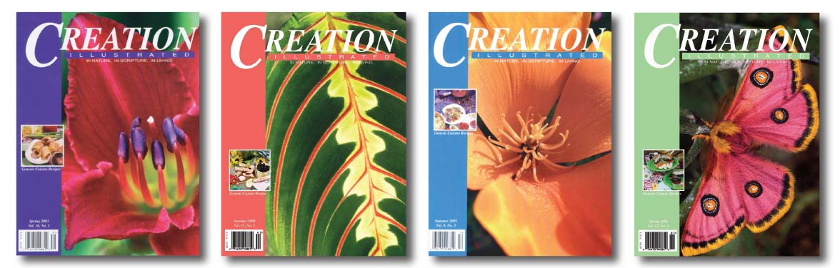4covers Creation Illustrated