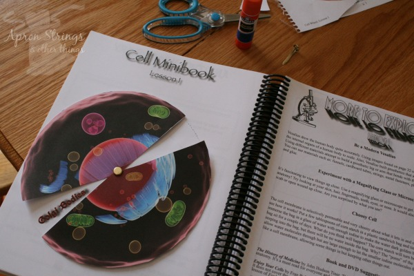 Apologia Exploring Creation Science Notebooking Journal Cell Structure at ApronSTringsOtherThings.com