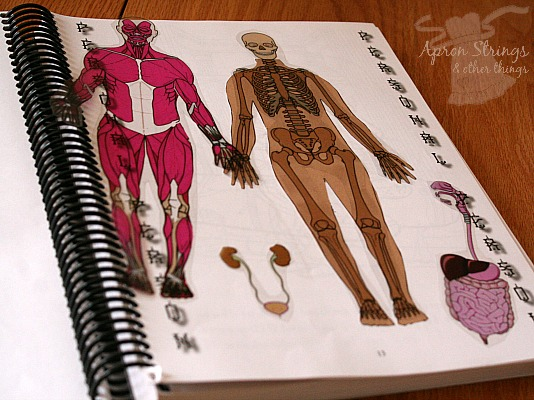 Apologia Human Anatomy Physiology journal template pages at ApronSTringsOtherThings.com